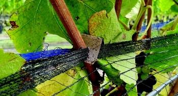 vine clips slide